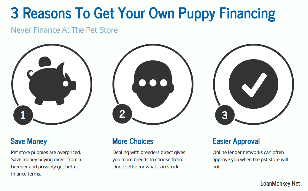 An infographic on bad credit puppy loans.