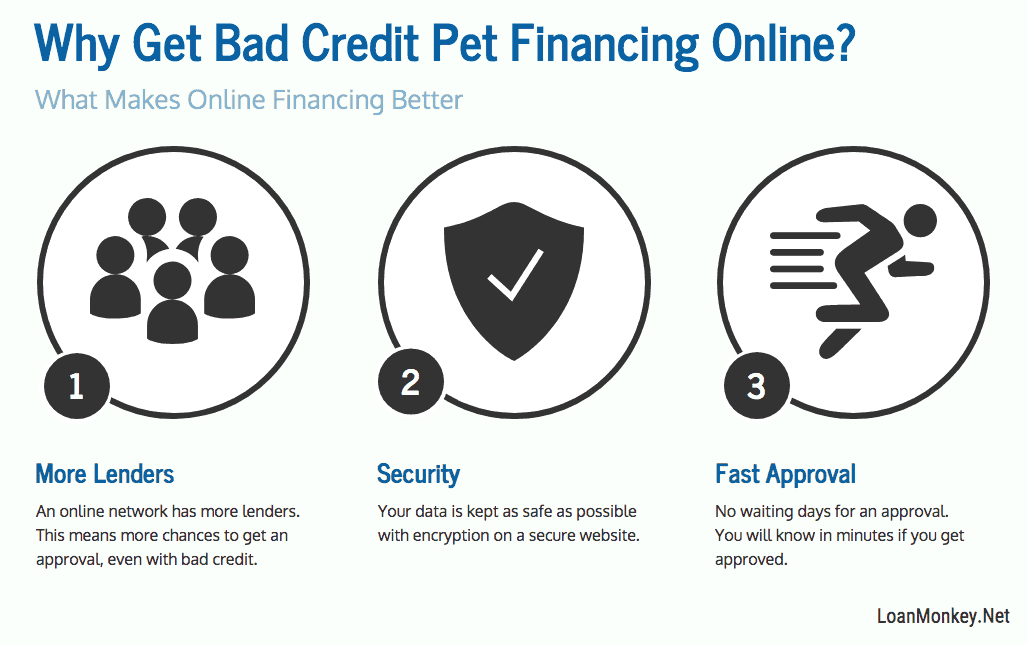Reasons for bad credit financing of a pet infographic.