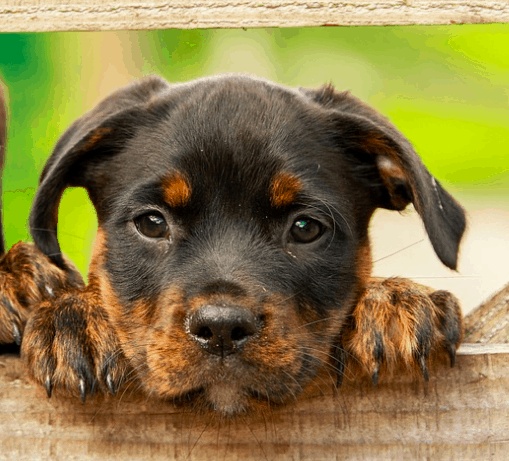 Cost of puppy ownership