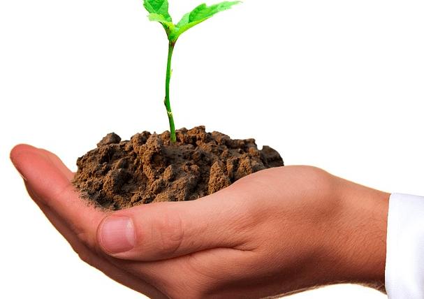 Being Green & Saving Money