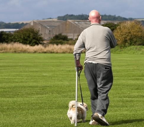Making money walking dogs