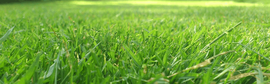 Grass that could be cut by a zero turn mower.