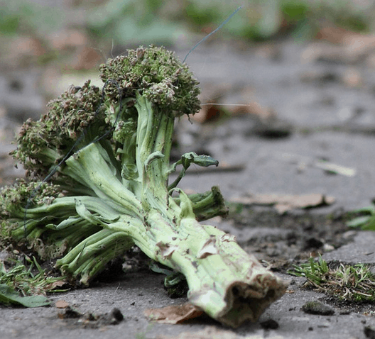 A piece of brocolli that was wasted.