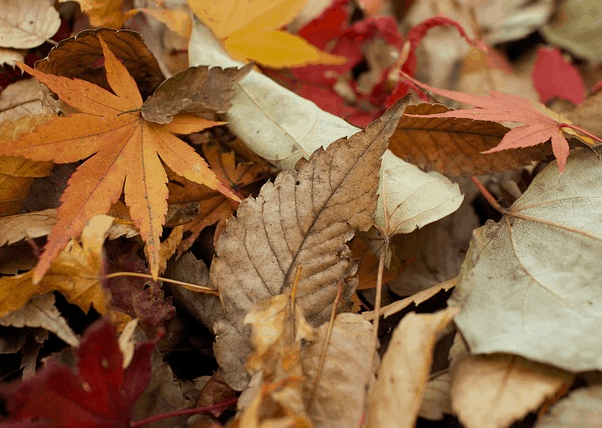 A pile of fall leaves.