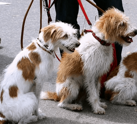 A person with a dog walking business