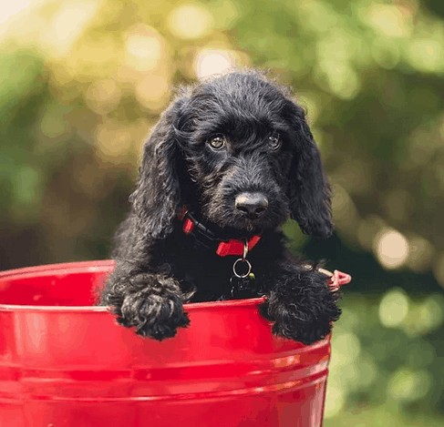 A costly pet in a red bucket.