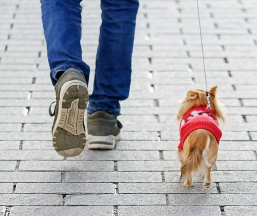 A person making money walking a dog.