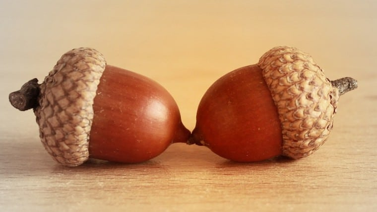 2 acorns representing a couple.