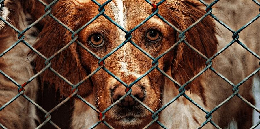 A dog awaiting a new home.